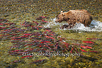 Katmai Wilderness 2015