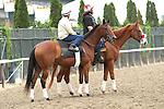 June 4, 2014: Beholder, contender for Ogden Phipps Stakes contender morning works at Belmont. Sue Kawczynski/ESW/CSM