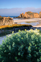 Pfieffer Big Sur State Park and Pfeiffer Beach, Central Coast, Big Sur, California.