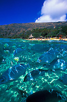 Under/over view at Hanauma bay marine life sanctuary, Oahu