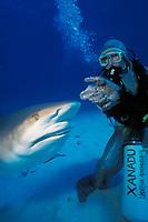diver feeding Caribbean reef shark, Carcharhinus perezii, Bahamas, Caribbean Sea, Atlantic Ocean