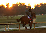Bon Raison, trained by trainer Jack Sisterson, exercises in preparation for the Breeders' Cup Sprint at Keeneland Racetrack in Lexington, Kentucky on October 31, 2020.