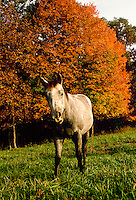 Fall horse with orange leaves in autumn