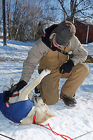 "Volunteer pilot Dale Looney scratches an itch on  ""Alaska"" one of Ed Stielstra's dogs on Saturday afternoon at the Grayling checkpoint during Iditarod 2011."