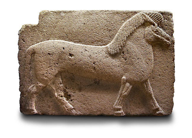 Picture of Phrygian releif sculpture Orthostat of a horse from Kucukevier, Ankara, Turkey. Ancora Archaeological Museum. 7th century BC. Note the stylised leg muscels. 5
