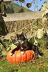 Buster on pumpkins