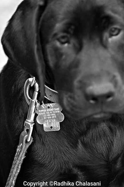 BEACON, NEW YORK-AUGUST 15:  The dogs in the program wear Puppies Behind Bars dog tags at Fishkill Correctional Facility. The Puppies Behind Bars (PPB) Program works with prison inmates in New York, New Jersey, and Connecticut to train service dogs, including ones who help injured soldiers.