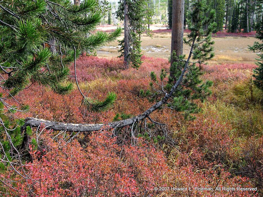 Yellowstone Fall Foliage