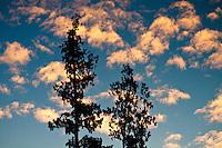 Clouds lit up by sunset - Westland National Park, West Coast, New Zealand
