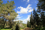 Iron forest in Samaria