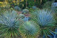 Peckerwood hardy succulent garden, Texas