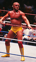 Hulk Hogan  1988<br /> Photo By John Barrett/PHOTOlink