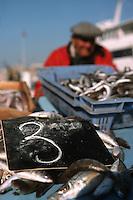 Europe/France/Provence-Alpes-Côte d'Azur/Alpes-Maritimes/Nice: Poutine sur le Marché au poisson, spécialité niçoise //   Europe, France, Provence-Alpes-Côte d'Azur, Alpes-Maritimes, Nice: Poutine, Gianchetti  on the Fish Market, Niçoise specialty