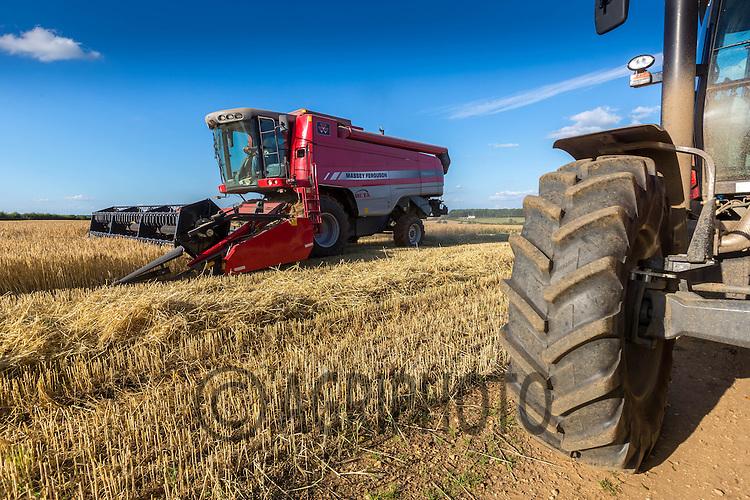 Harvesting Winter Barley in Rutland<br /> Picture Tim Scrivener 07850 303986