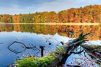Buchenwald am Buckow-See, Grumsiner Forst, Weltnaturerbe der UNESCO, Angermünde, Uckermark, Brandenburg, Deutschland