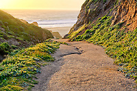 Path to beach at sunset.  Point Reyes National Seashore. California