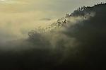 Gorillas in the Mist - Morning Mist in Bwindi Impenetrable Forest, Uganda, one of the world's few remaining gorilla habitats