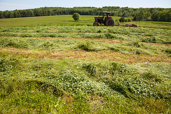 Rustlewood, the Johnson family dairy farm in Kittery, Maine, will soon be protected with a conservation easement. Photograph by Peter E. Randall.