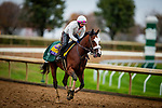 October 30, 2020: Tiz The Law, trained by trainer Barclay Tagg, exercises in preparation for the Breeders' Cup Classic at Keeneland Racetrack in Lexington, Kentucky on October 30, 2020. Alex Evers/Eclipse Sportswire/Breeders Cup