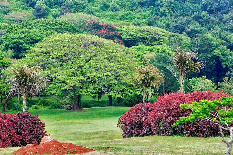 View of National Tropical Botanical Garden. Kauai, Hawaii