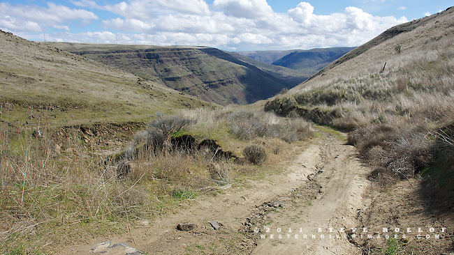 Free Bridge Road begins its descent into the Lower Deschutes Canyon.