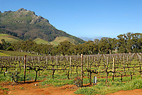 South African vineyards early in spring, nearby Stellenbosch