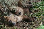 Sleeping wildlife