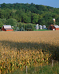 Putnam County, IL<br /> Red farm buildings and field of corn in early fall