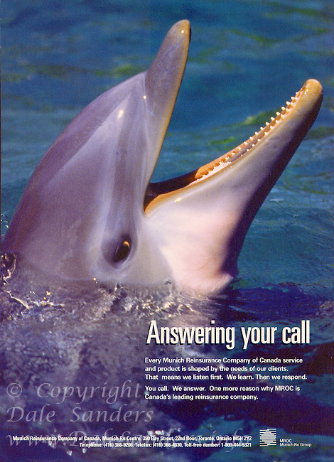 Insurance Ad with an image of a young Bottlenose Dolphin.
