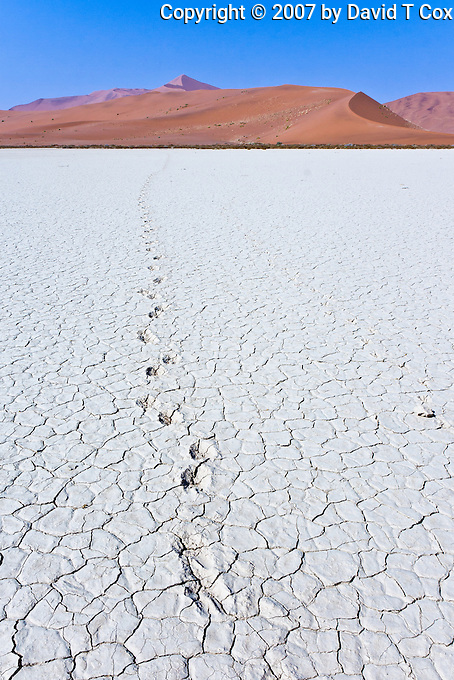 Animal tracks, Sossusvlai flats and dunes, Namibia