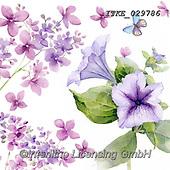 Isabella, FLOWERS, BLUMEN, FLORES, paintings+++++,ITKE029786,#f#, EVERYDAY