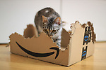 Amazon. Pergine Valsugana, Italy on November 24, 2020. A cat eats and destroys an Amazon Prime Parcel Box during the second lockdown due to the Pandemic of Covid-19 Coronavirus.