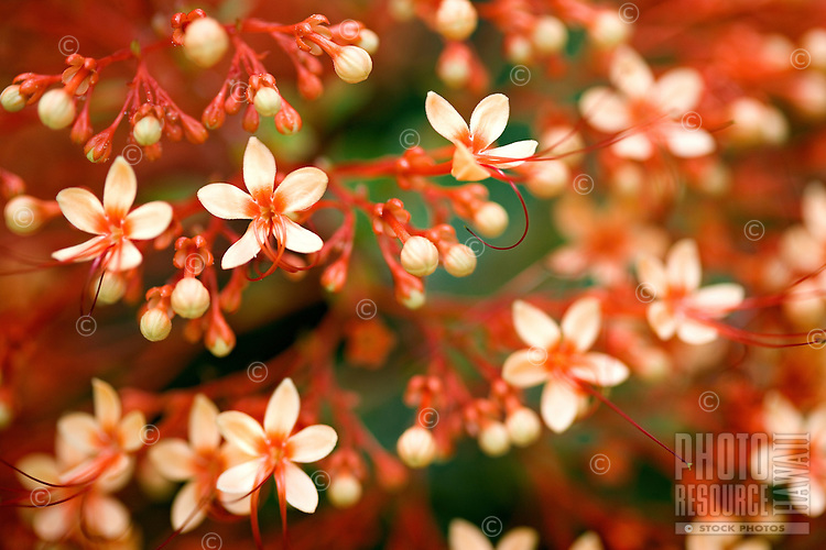 Small light orange flowers with a very narrow depth of field and soft focus background