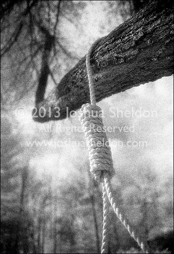 Rope noose hanging from tree branch