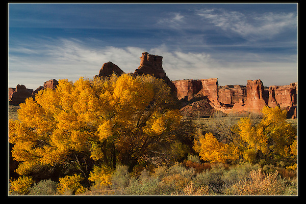 Courthouse Wash and cottonwood trees in fall color, Arches National Park, UT.<br /> John offers Arches National Park photo tours.  Year-round Utah photo tours.