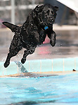 Bones plays at the fourth annual Pooch Plunge at the Carson Aquatic Facility in Carson City, Nev., on Saturday, Sept. 22, 2012. The Parks 4 Paws event helps raise funds for local dog projects..Photo by Cathleen Allison