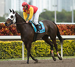 10 January 2010: Maddy's Heart and Jockey Elvis Trujillo after the Marshua's Rover Stakes at Gulfstream Park in Hallandale Beach, FL.