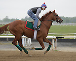 Animal Kingdom, winner of the 137th Kentucky Derby, gallops at Fair Hill Training Center in Fair Hill, MD on May 14, 2011. (Joan Fairman Kanes/EclipseSportswire)