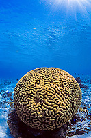 hard coral, Sumilon Island, Philippines, Pacific Ocean