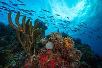 Reef Scenic<br /> Carval Rock<br /> US Virgin Islands