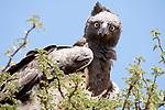 Eagle looks surprised by Burak Dogansoysal