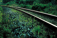 Perspective of rails in a wooded area. Houston Texas USA.