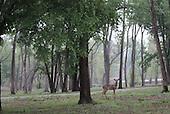 Oklahoma Wildlife