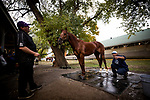October 31, 2018 :  Chad Summers with Mind Your Biscuits at Churchill Downs on October 31, 2018 in Louisville, Kentucky. Evers/ESW/Breeders Cup