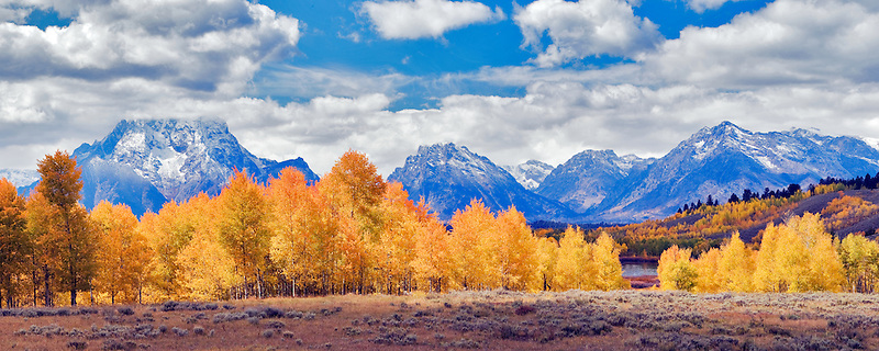 Fall colored aspens at Oxbow Bend of the Snake River. Teton National Park, WY