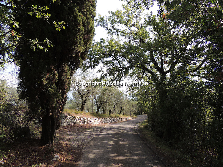 Val d'Arno,Italy - October 5, 2012:  Dappled light on a curving Tuscan road.