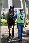 She Be Classy, trained by Graham Motion, walks in the paddock before the Grade III Robert G. Dick Memorial Stakes at Delaware Park, Stanton, DE, July 9, 2011. (Joan Fairman Kanes/Eclipsesportswire)