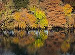 12.11.13 - Autumn Shore...