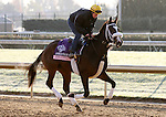 Stephanie's Kitten, trained by Wayne Catalano and to be ridden by Tyler Pizarro , exercises in preparation for the 2011 Breeders' Cup at Churchill Downs on October30, 2011.