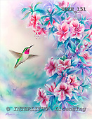 Kayomi, REALISTIC ANIMALS, paintings, humming bird, SweetAmbrosia_M, USKH151,#A# realistische Tiere, realista, illustrations, pinturas